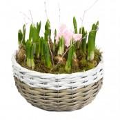 Planted Spring Basket